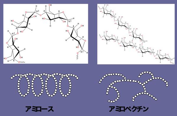 アミロースとアミロペクチンの構造の違い
