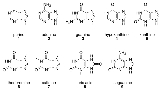 様々なプリン体の種類