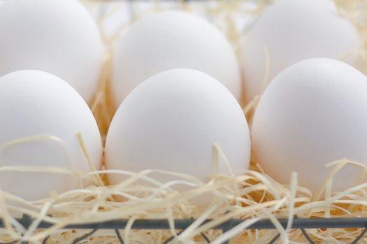 たまご 卵