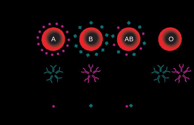 ABO式血液型の分類方法