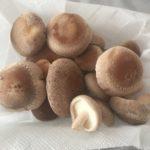 自宅で椎茸が繰り返し育てられるキノコ栽培キット