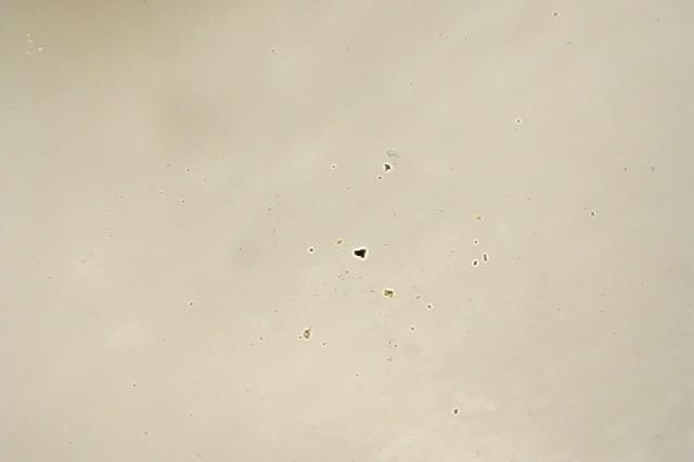 雪の中のゴミやホコリの拡大写真2